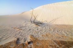Areia e planta seca Fotos de Stock