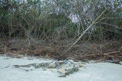 Areia e poeira Imagem de Stock