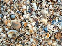 Areia e shell naturais Imagens de Stock Royalty Free