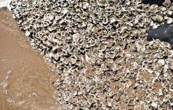 A areia encheu escudos imagens de stock