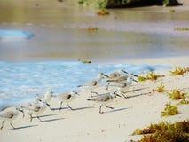 A areia fuge aos saltos Imagens de Stock Royalty Free