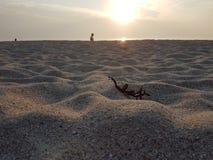 Areia Half Moon Bay arenosa de Sun fotografia de stock royalty free