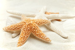 Areia macia da praia com um Starfish imagens de stock royalty free