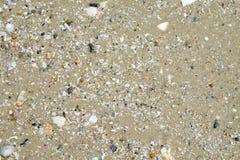 Areia molhada com shell no fundo da textura do litoral da praia verão Imagem de Stock