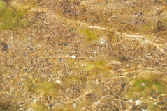 Areia na terra Imagens de Stock Royalty Free
