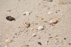 Areia natural da praia com os bens encalhados pequenos Fotos de Stock