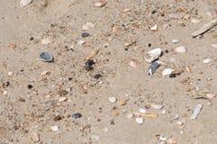 Areia natural da praia com os bens encalhados pequenos Imagem de Stock