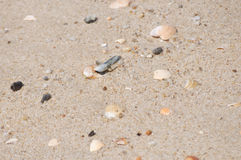 Areia natural da praia com os bens encalhados pequenos Foto de Stock Royalty Free