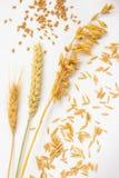 Aren van tarwe en tarwekorrel Oren van haver en haverkorrels stock foto's