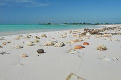 Arena blanca con las conchas marinas en la playa del mar del Caribe imágenes de archivo libres de regalías