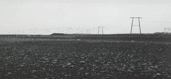 Arena de alto voltaje, negra, costa costa islandesa y seaguls fotos de archivo