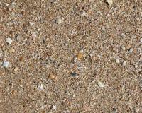 Arena de la textura con las conchas marinas Imagen de archivo