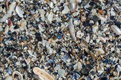 Arena de las conchas marinas Imagenes de archivo