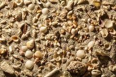 Arena de mar con las cáscaras tropicales foto de archivo
