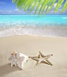 Arena del Caribe del blanco del shell de la impresión de las estrellas de mar de la playa Imagen de archivo