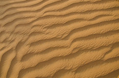 Arena del desierto soplada por cierre del viento para arriba Imágenes de archivo libres de regalías