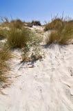 Arena e hierba, mar Mediterráneo Fotografía de archivo