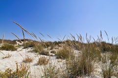 Arena e hierba, mar Mediterráneo Imágenes de archivo libres de regalías