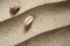 Arena macra de la playa del caracol de mar del shell del primer ondulada Imagen de archivo