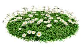 Arena naturale dell'erba con i fiori Immagini Stock Libere da Diritti