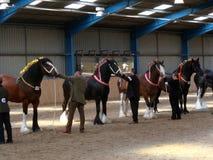 Arena pesada de la demostración del caballo foto de archivo libre de regalías