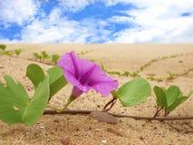 Arena rosada de la flor en la playa Imagen de archivo