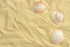 Arena y seashells Imagen de archivo libre de regalías