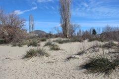 Arena y Sun del desierto Fotos de archivo libres de regalías