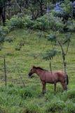 arenal Costa Rica vulkan Royaltyfri Bild