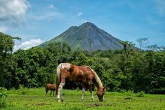 Arenal Volcan. Costa Rica forest clouds Stock Images