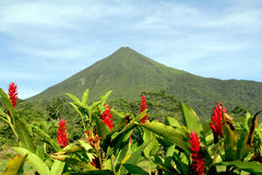 Arenal volcano. In Costa Rica with nice red flowers Royalty Free Stock Photography