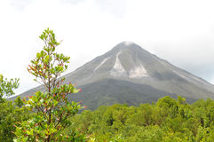 Arenal Volcano, Costa Rica. Costa Rica's Arenal Volcano in background with budding plant in foreground Stock Image