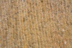 Arenaria Fotografia Stock
