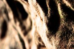 arenaria Immagini Stock Libere da Diritti