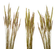 arenaria ammophila χλόη παραλιών Στοκ εικόνα με δικαίωμα ελεύθερης χρήσης