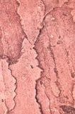 Arenaria rossa. Fotografia Stock Libera da Diritti
