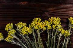 Arenarium helichrysum ιατρικών εγκαταστάσεων στον ξύλινο πίνακα Τοπ όψη Στοκ Εικόνες