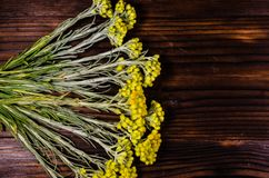 Arenarium helichrysum ιατρικών εγκαταστάσεων στον ξύλινο πίνακα Τοπ όψη Στοκ φωτογραφία με δικαίωμα ελεύθερης χρήσης
