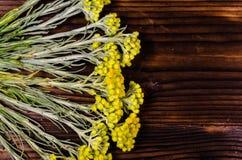 Arenarium helichrysum ιατρικών εγκαταστάσεων στον ξύλινο πίνακα Τοπ όψη Στοκ Φωτογραφίες