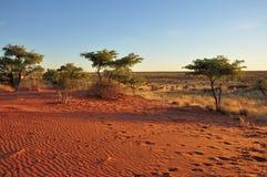 Arenas y arbusto rojos en la puesta del sol, Kalahari Imagenes de archivo
