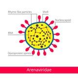 Arenaviridae Ταξινόμηση των ιών ελεύθερη απεικόνιση δικαιώματος