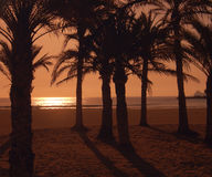 Arenel beach. Beach shot through palm trees taken with an amber filter Royalty Free Stock Photography