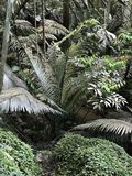 Arenga pinnata, Cukrowa palma, Arenga włókno lub palma palma lub Gomuti palma lub Kaong w Tajlandia Zdjęcie Stock