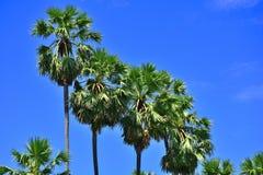 Arengapalme-Baumgartenweg mit sonnigem in Thailand Stockbild