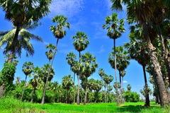 Arengapalme-Baumgartenweg mit sonnigem in Thailand Lizenzfreies Stockfoto
