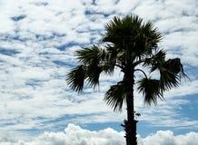 Arengapalme und Himmel Stockfotografie