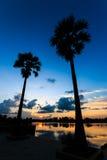 Arengapalmebäume auf Sonnenunterganghimmel Lizenzfreie Stockfotos