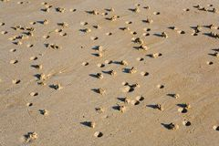 arenicola海滩转换沙栎海滨广场 库存照片