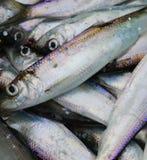 Arenques dos peixes de mar Báltico Imagem de Stock Royalty Free