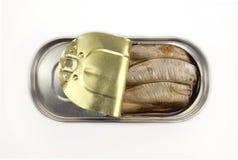 Arenques pequenos em uma lata metálica Imagem de Stock